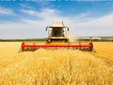 Продовольство Зерно і мука, ціна 2700 Грн./шт., Фото