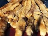 Тваринництво Хутрова тваринництво, ціна 350 Грн., Фото