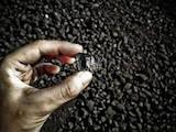 Дрова, брикети, гранули Вугілля, ціна 6800 Грн., Фото
