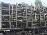 Дрова, брикети, гранули Дрова, ціна 28000 Грн., Фото