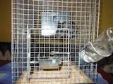 Тваринництво Різне, ціна 350 Грн., Фото