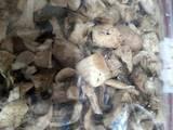 Продовольство Гриби, ціна 400 Грн./кг., Фото