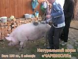 Тваринництво Корм, ціна 20 Грн., Фото