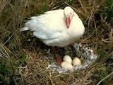 Продовольство Яйця, ціна 20 Грн., Фото
