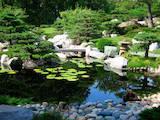 Домашні рослини Декоративні рослини, ціна 300 Грн., Фото