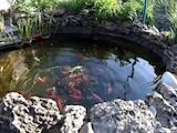 Рибки, акваріуми Акваріуми і устаткування, ціна 300 Грн., Фото