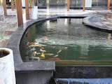 Рибки, акваріуми Установка і догляд, ціна 300 Грн., Фото