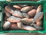 Продовольство Риба і рибопродукти, ціна 10 Грн./кг., Фото