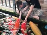 Рибне господарство Корм для риби, ціна 300 Грн., Фото