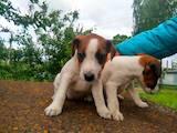 Собаки, щенята Невідома порода, ціна 1650 Грн., Фото