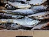 Продовольство Риба і рибопродукти, ціна 60 Грн./кг., Фото