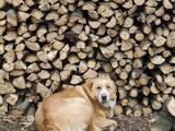 Дрова, брикети, гранули Дрова колоті, ціна 800 Грн., Фото