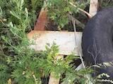 Приміщення,  Ангари Харківська область, ціна 15 Грн., Фото