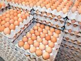 Продовольство Яйця, ціна 1.60 Грн., Фото