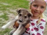 Собаки, щенята Західно-Сибірська лайка, ціна 1000 Грн., Фото