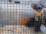 Тварини Різне, ціна 3500 Грн., Фото
