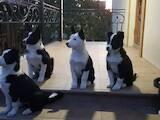 Собаки, щенята Російсько-Європейська лайка, ціна 1800 Грн., Фото