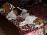 Пошуки, знахідки Собаки, Фото