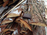 Дрова, брикети, гранули Дрова, ціна 100 Грн., Фото