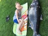 Охота, рыбалка Удочки и снасти, цена 35 Грн., Фото